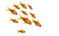 一群金鱼图片素材