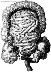 人体器官黑白图片素材