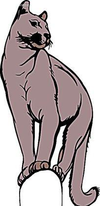 矢量山猫插图