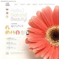 菊花图案公司网页模板