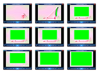 带绿抠粉红玫瑰视频模板
