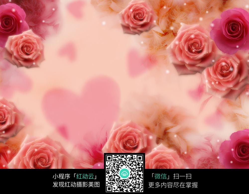 粉色玫瑰花背景图片免费下载 编号3887426 红动网图片