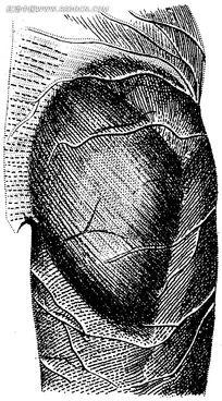 肌肉解剖图