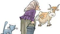去挤牛奶的老妇人时尚矢量人物漫画