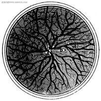 视网膜插图