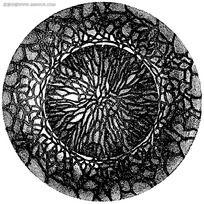 视网膜结构黑白图