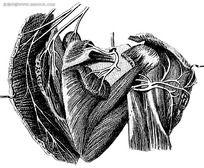 新造解剖图