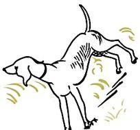 手绘线描小狗时尚风格插画