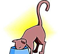 吃东西的猫咪韩国动物漫画