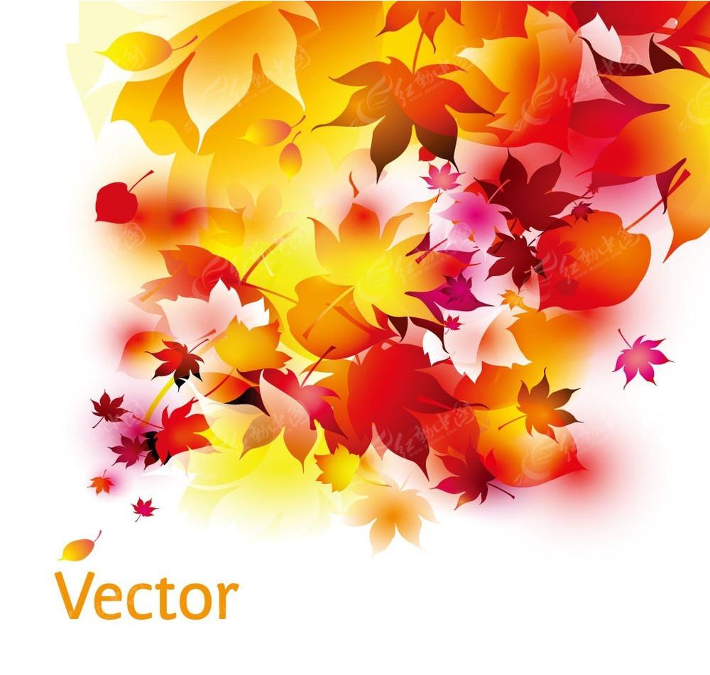 彩色枫叶矢量素材图片