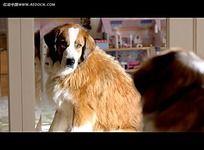Volkswagen大众汽车2012超级碗广告狗狗减肥篇