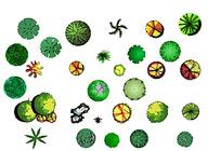 手绘园林植物平面素材彩图