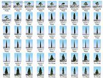 3D树木模型图片集合max