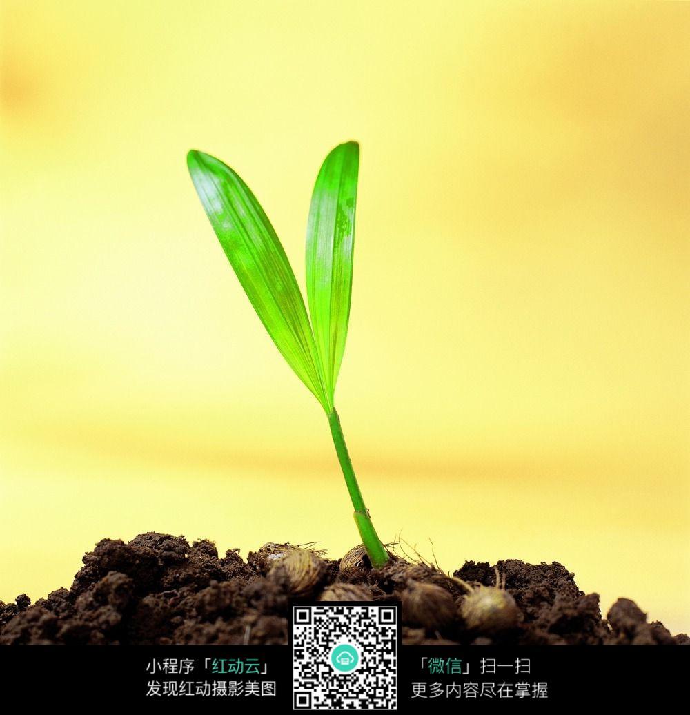 春天绿芽素材