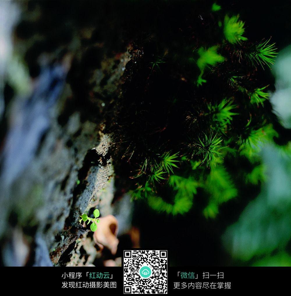 会吃昆虫的植物图片