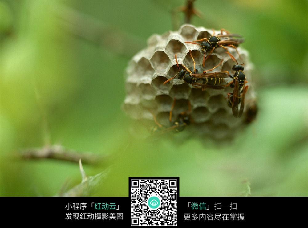 大象昆虫-动物昆虫野生素材生物蜜蜂图片蜜蜂蜂巢说次声波图片