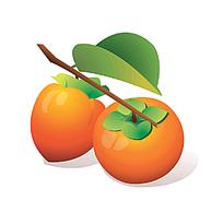 柿子手绘插画图形