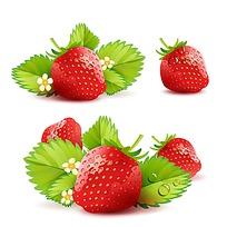 新鲜草莓手绘素材