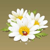 七星瓢虫白色花朵时尚矢量动物插画