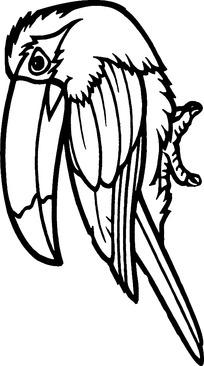 线描金刚鹦鹉时尚矢量动物插画