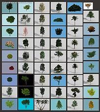 3D树木素材集合max