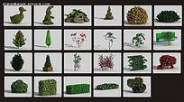 3D植物花圃素材max