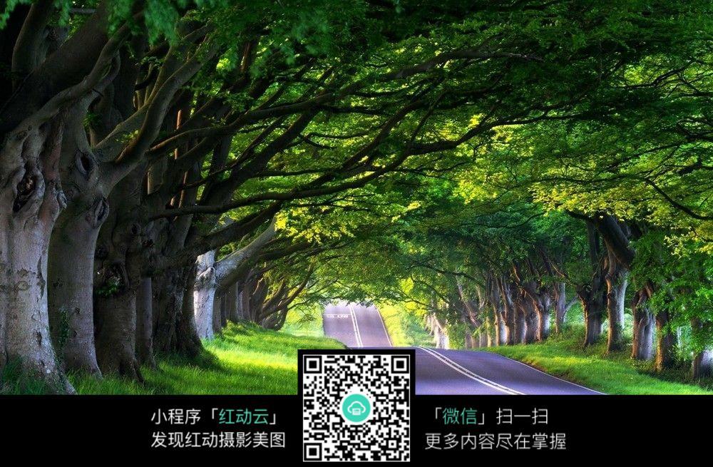 树图片手绘 唯美图片