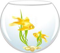 鱼缸中的金鱼
