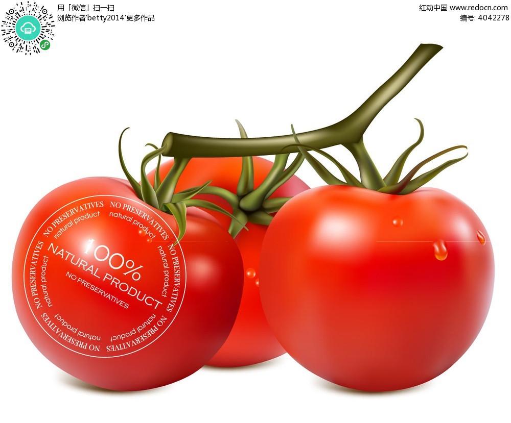 西红柿手绘插画