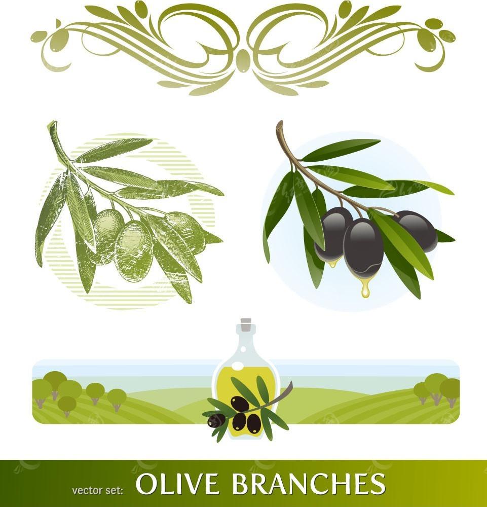 橄榄枝橄榄油手绘插画