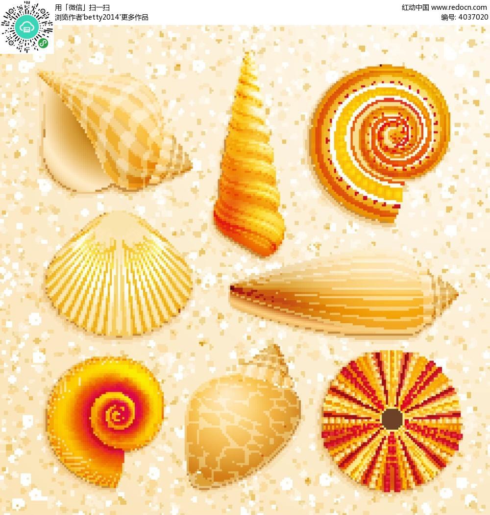 不同形状的贝壳和海螺