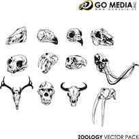 各种动物的骷髅矢量素材