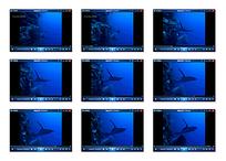 海底景观视频素材