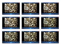 生物细菌视频素材