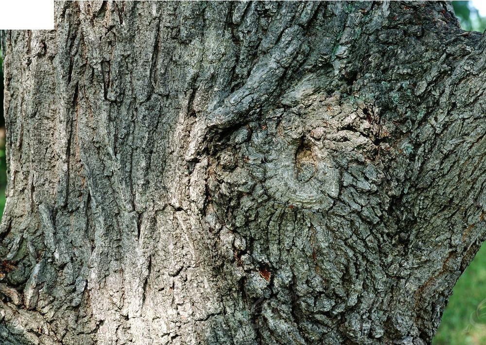凹凸木质树皮材质贴图