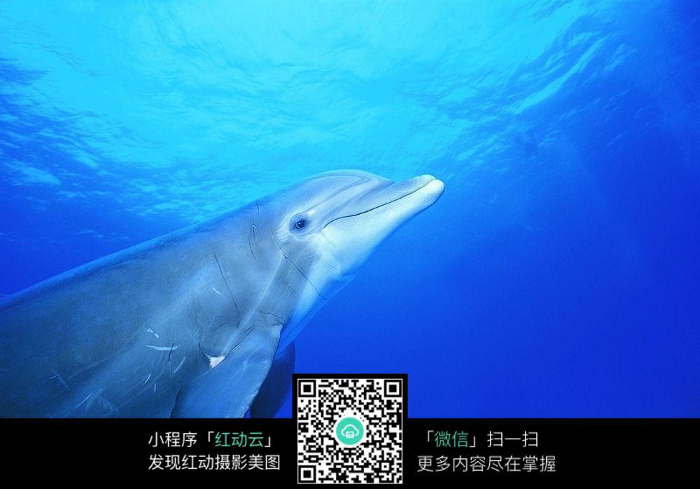 海洋里的海豚图片_水中动物图片