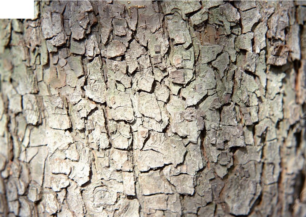 块状树皮纹理贴图
