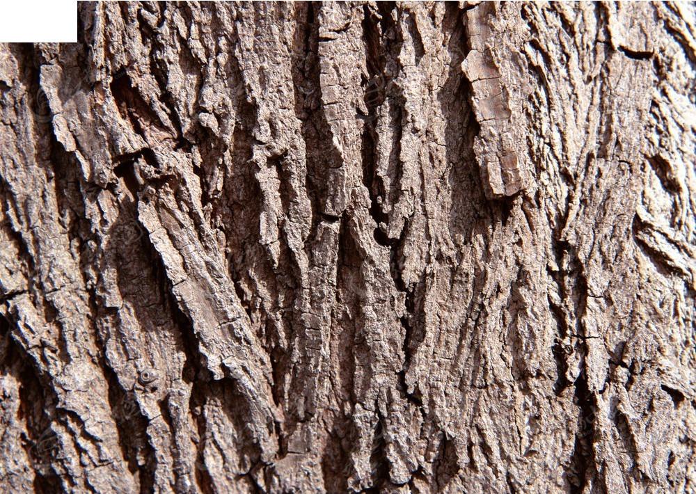 木质树皮纹理贴图jpg免费下载_材质贴图素材