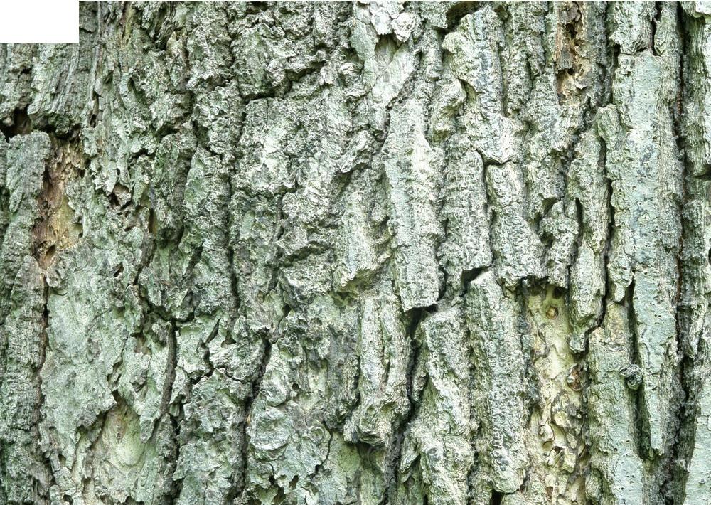 树木树皮3d材质贴图