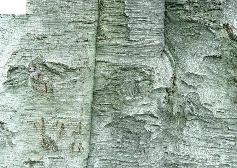 树皮材质3d材质贴图