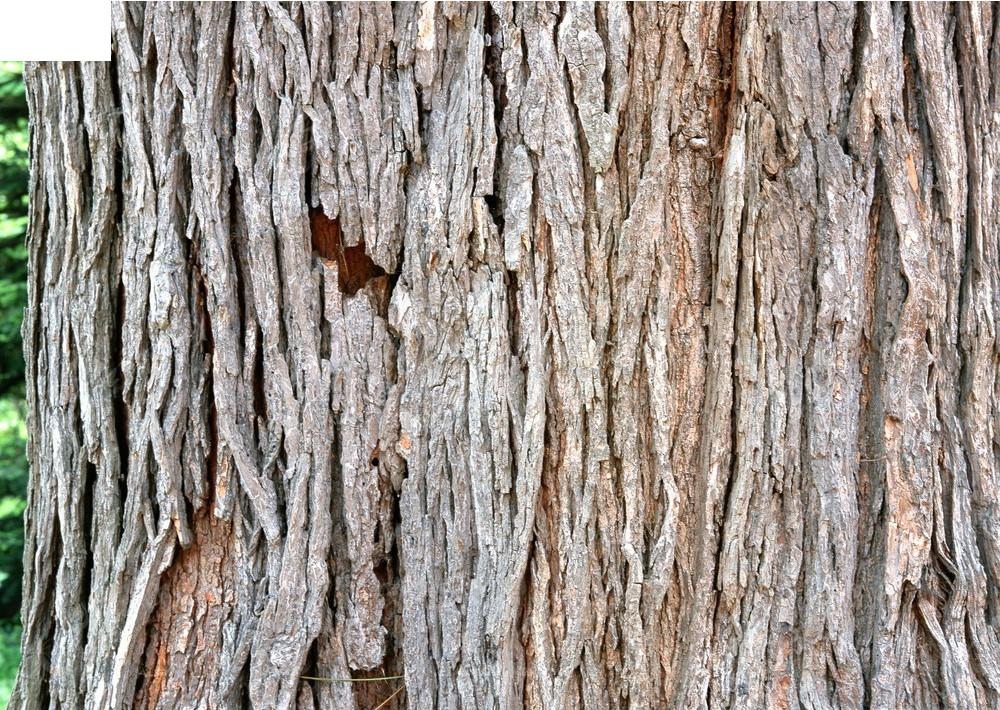 竖向木纹树皮材质贴图