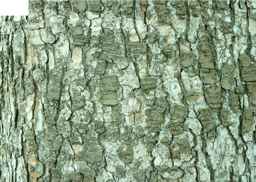 斑驳树皮纹理3d材质贴图