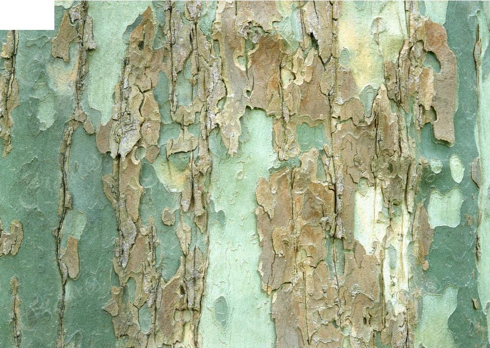 法桐树皮纹理3d材质贴图
