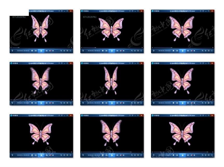 蝴蝶 扇动 翅膀 动态 视频视频素材 彩蝶纷飞