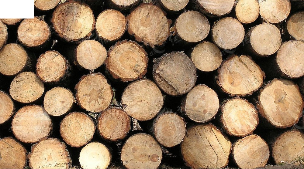 木头年轮纹理 木头 横切面