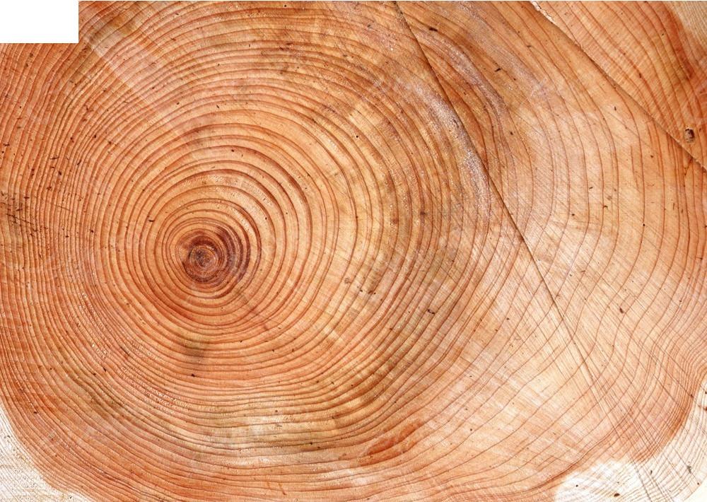 纹理美 木头纹理