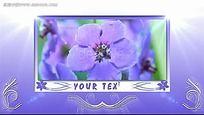 紫色鲜花背景视频