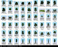 3D植物模型图片集合max