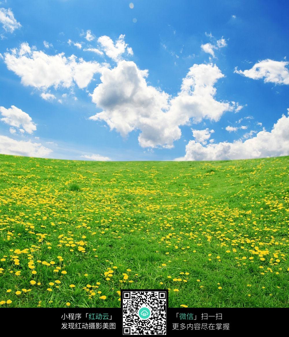 蓝天大树摄影作品