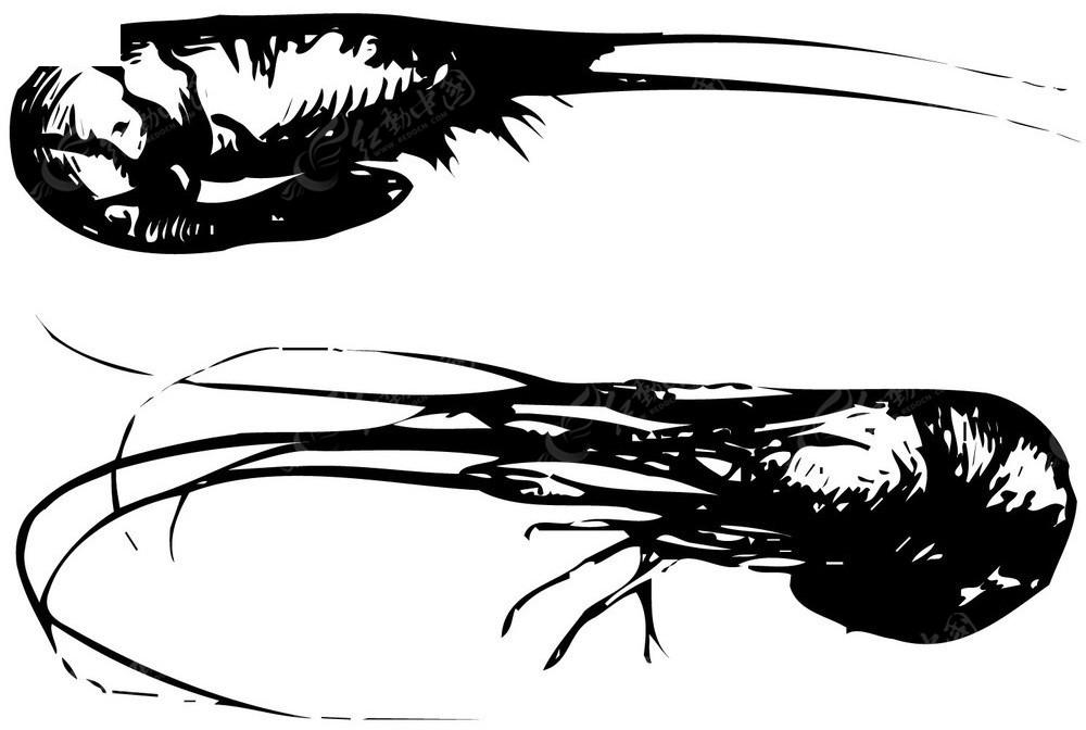 基围虾矢量手绘图形